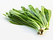 Chinese broccoli (Brassica alboglabra)