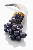 Black grapes in a horn