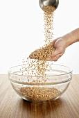 Weizen über die Hand in eine Glasschüssel schütten
