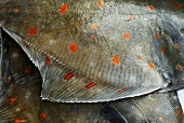 Two plaice (detail)