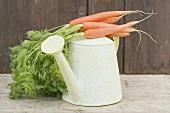Eine Giesskanne mit Karotten