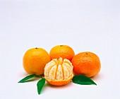 Mandarinen (frei)