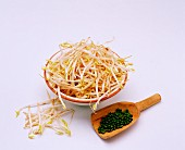 Mung beansprouts and mung beans