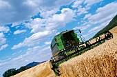 Mähdrescher bei der Ernte von Weizen