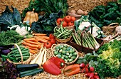 Assorted types of vegetable for the Harvest Festival