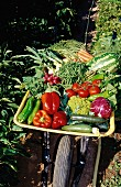 A wheelbarrow full of vegetables