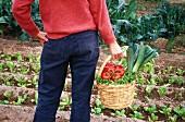 Holding a basket of harvested vegetables