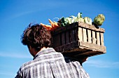 A farmer carrying a crate of vegetables