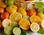 An arrangement of grapefruits, oranges, lemons and limes