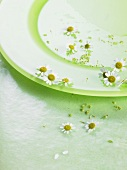 Flowers on green plate