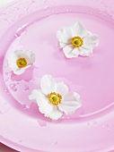 Japanese anemones on pink plate