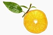 Slice of orange with leaf