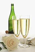 Sparkling wine and white rose
