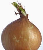 Brown onion (close-up)