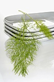 Fennel on stacked dishes
