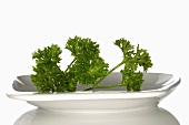 Curly parsley in white dish