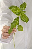 Woman holding a stalk of basil