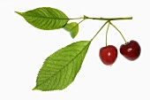Cherries with stalks and leaves