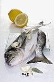 Sea bream with ingredients (garlic, sage, pepper, lemon)