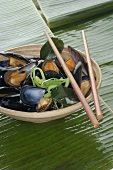 Mussels in dish with chopsticks