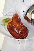 Chef serving lobster