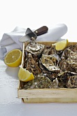 Fresh oysters in box, pieces of lemon and oyster knife