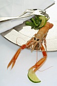 Scampo (Norway lobster) on silver plate
