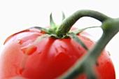 A tomato on the vine