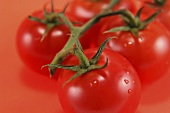 Several tomatoes on the vine