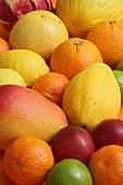 Verschiedene tropische Früchte