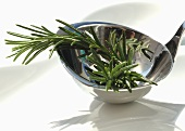 Two sprigs of rosemary in a ladle