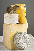 Live mouse on pieces of different cheeses