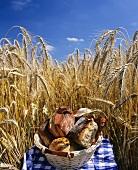 Basket of bread rolls on a picnic cloth in a cornfield