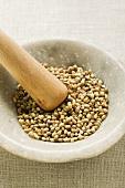 Coriander seeds in mortar