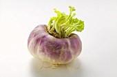 A turnip