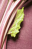 Beetroot stalks with leaf, close-up