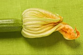 Courgette with flower