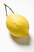 A lemon with stalk