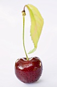 Cherry with stalk, leaf and drops of water