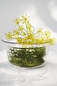 Dill and dill flowers in glass bowl