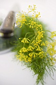 Dill flowers with knife