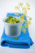 Dill and dill flowers in bowl on blue cloth