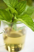A sprig of fresh mint in tea glass