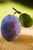 A plum with stalk and leaf