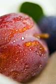 Red plum with leaf (close-up)