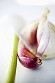 Garlic bulb, garlic clove and spring onion