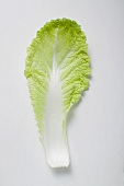 A Chinese cabbage leaf