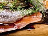 Fischschwanz vom Bachsaibling mit Dill
