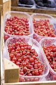 Redcurrants in punnets at a market