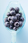 Fresh blueberries in light blue glass jug (overhead view)